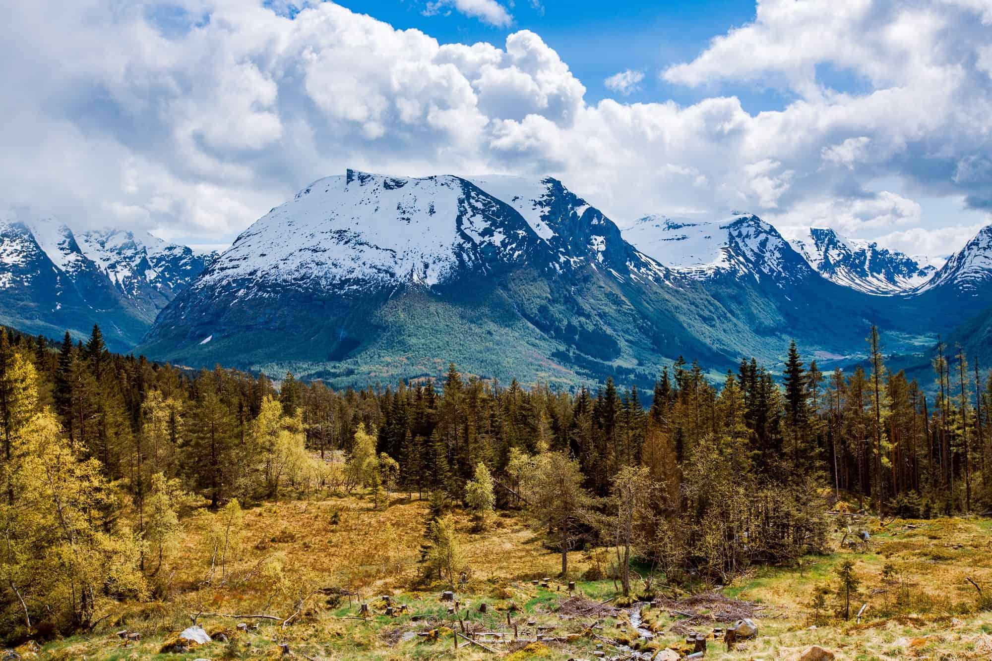 Норвегия запретила вырубку леса