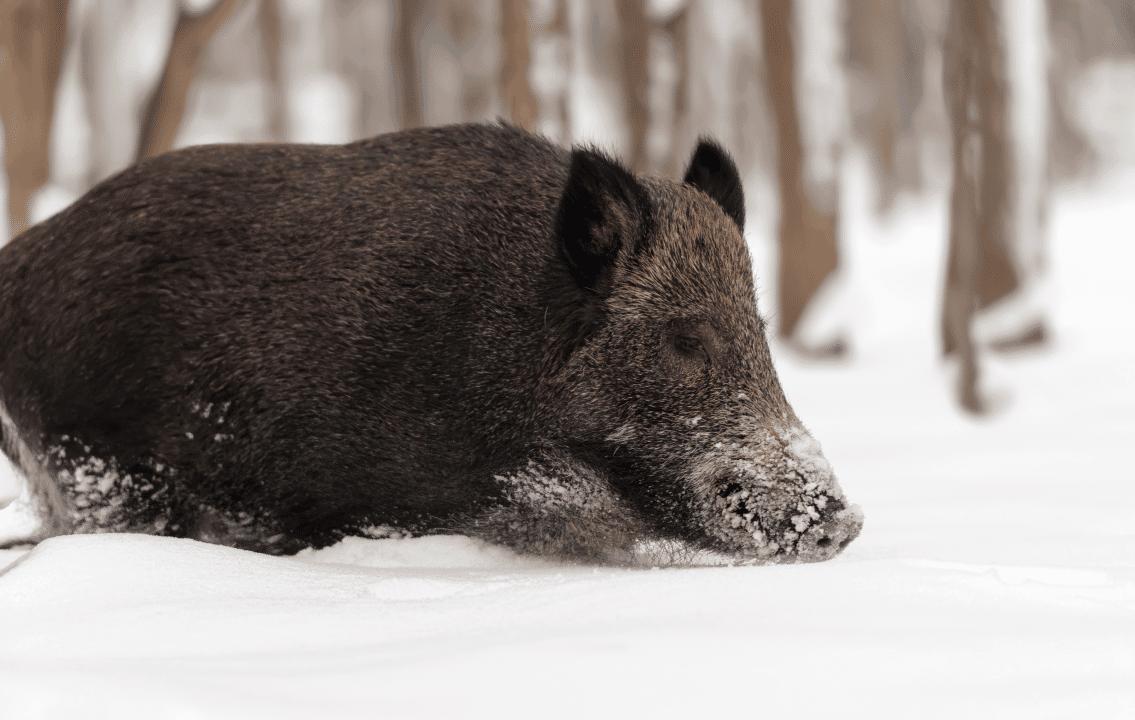 Власти Новосибирска объявили акцию «Спасём вместе диких животных»