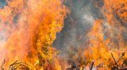 Увеличьте зоны обязательного тушения лесных пожаро 5