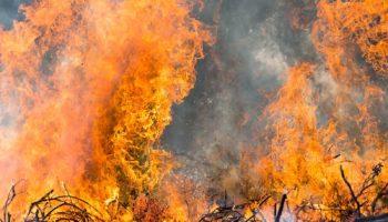 Увеличьте зоны обязательного тушения лесных пожаров 16