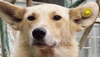 Собаки с бирками на ушах – гуманный подход к бродячим животным 10
