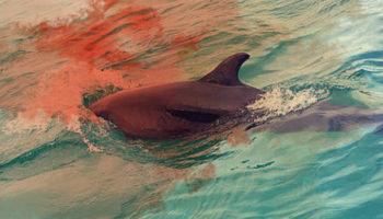 Закройте дельфинарии. Там сначала зарабатывают деньги на животных, а потом расчленяют их 90