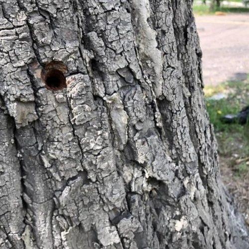 В Чите неизвестные уничтожают растущие вблизи билбордов деревья 3