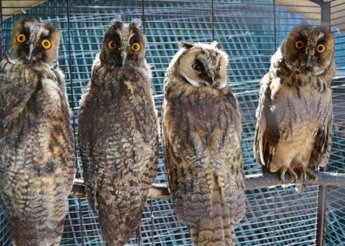 Животных из приюта «Спаси меня» выпустили в Харлушевском заказнике 4