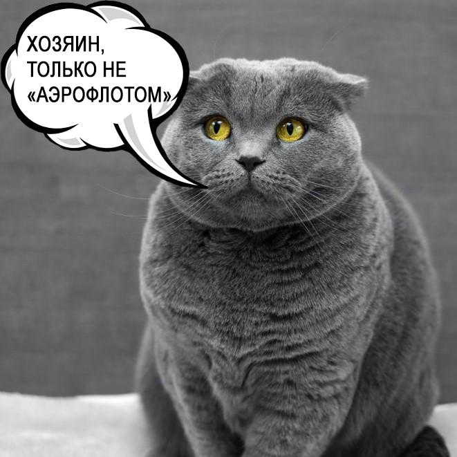 Часть оставленных «Аэрофлотом» в Шанхае животных вернулись в Москву 1