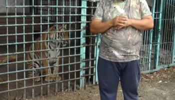 Карен Даллакян призывает оказать помощь амурскому тигру Гектору 91