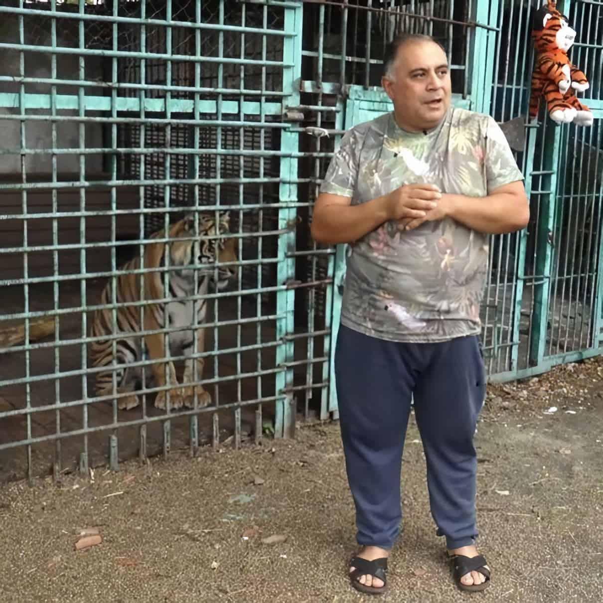 Карен Даллакян призывает оказать помощь амурскому тигру Гектору 1