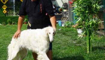 Карен Даллакян призвал к бесплатным базовым ветеринарным услугам 78