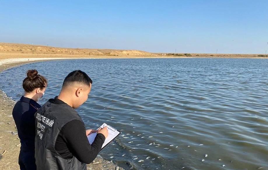 Администрация Калмыкии выясняет причины массовой гибели рыбы в Аршань-Зельменском водохранилище 1