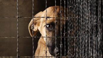 Новый закон о штрафах за жестокое обращение с животными 25