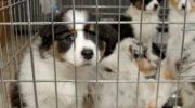 Звери не товар: запретите продажу кошек и собак в зоомагазинах 6