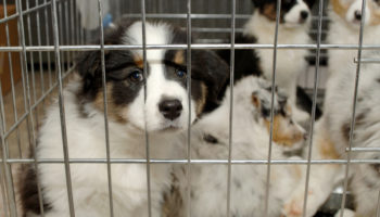 Звери не товар: запретите продажу кошек и собак в зоомагазинах 110