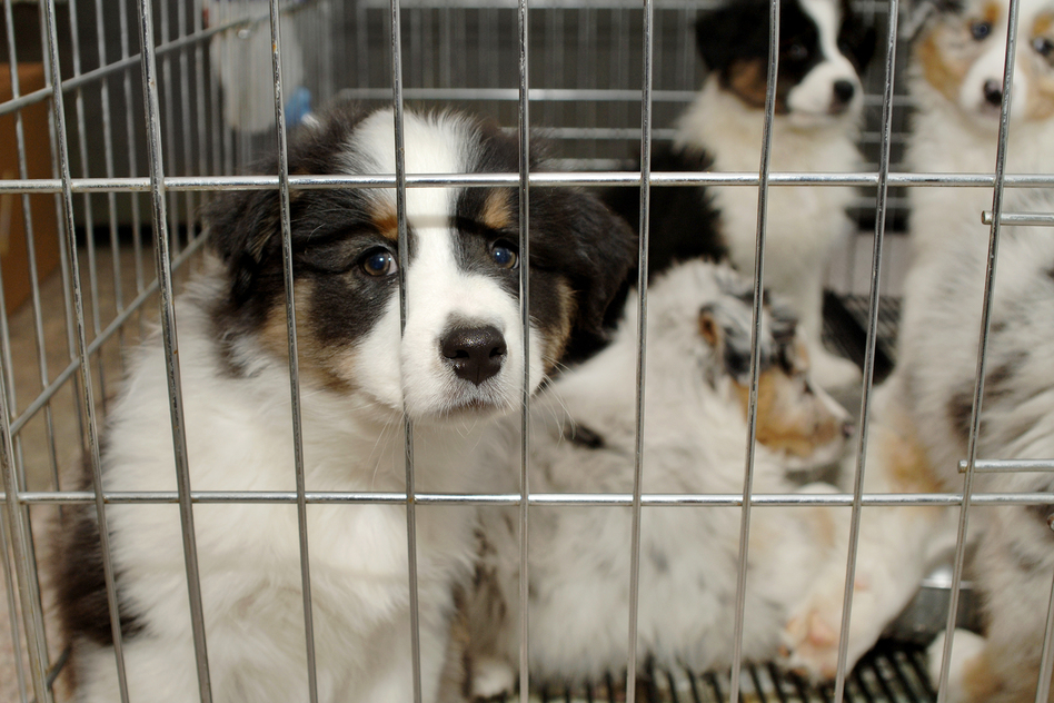 Звери не товар: запретите продажу кошек и собак в зоомагазинах 1