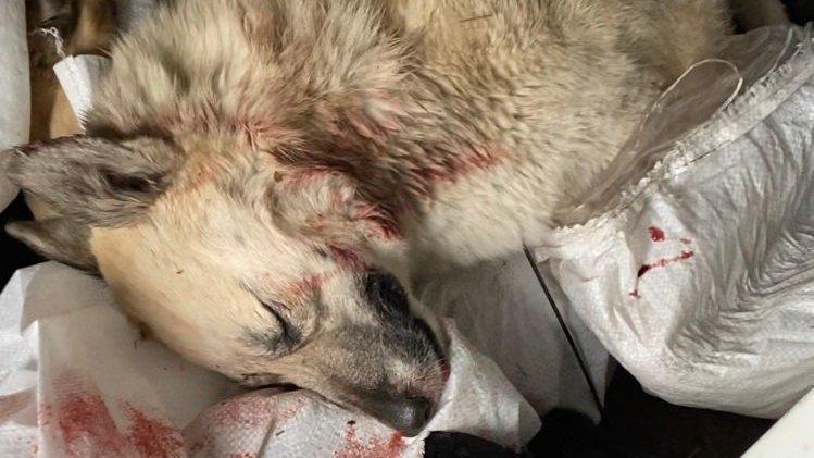 Массовое убийство собак в приюте для животных Иркутска 1