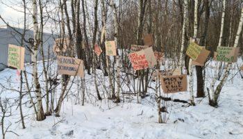 Активисты «Зелёной Альтернативы» устроили перфоманс против вырубки деревьев в нацпарке «Лосиный остров» 95