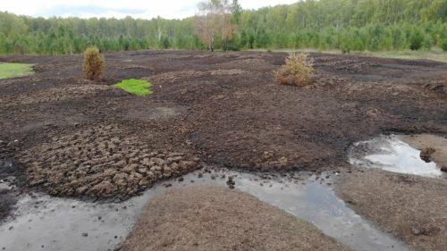 «Зелёная Альтернатива» призывает животноводческие предприятия цивилизованно подходить к утилизации биоотходов 3