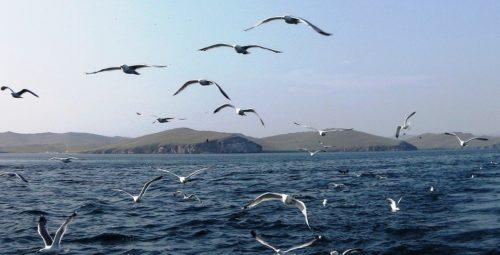 Руслан Хвостов: «Байкал может из объекта всемирного наследия превратится в объект национального позора» 3