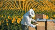 Не дадим олигархам монополизировать пчеловодство в России 4