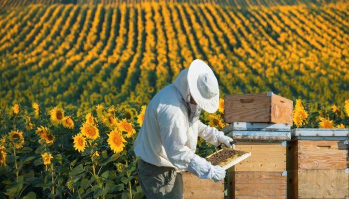Не дадим олигархам монополизировать пчеловодство в России 100