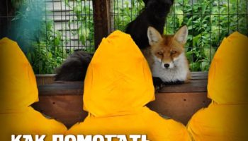 Как помогать животным и природе за 15 минут в день 98