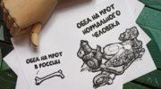 «Зелёная Альтернатива» предложила изменить методику расчета МРОТ 5