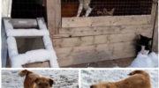 Руслан Хвостов обратился к главе Карелии за спасением собак из приюта в Сегеже 7