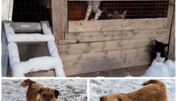 Руслан Хвостов обратился к главе Карелии за спасением собак из приюта в Сегеже 17